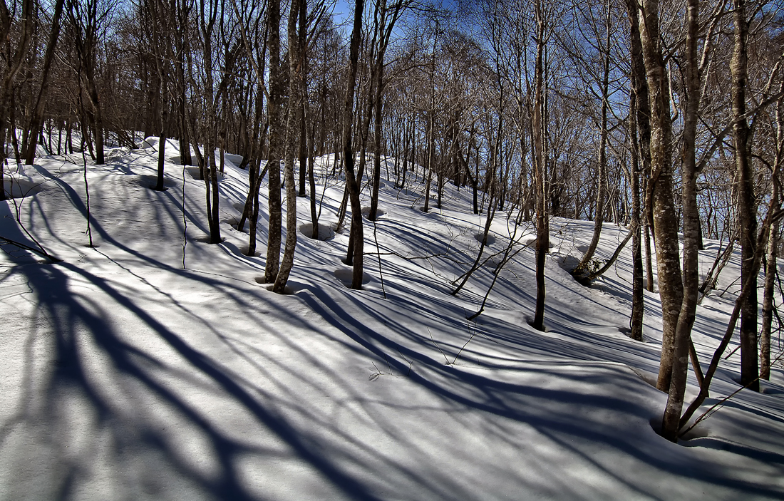 初春の「木の根開き(きのねあき)」。白神山地ではウサギが隠れていそうな立木の根っこの部分から雪が溶け始める