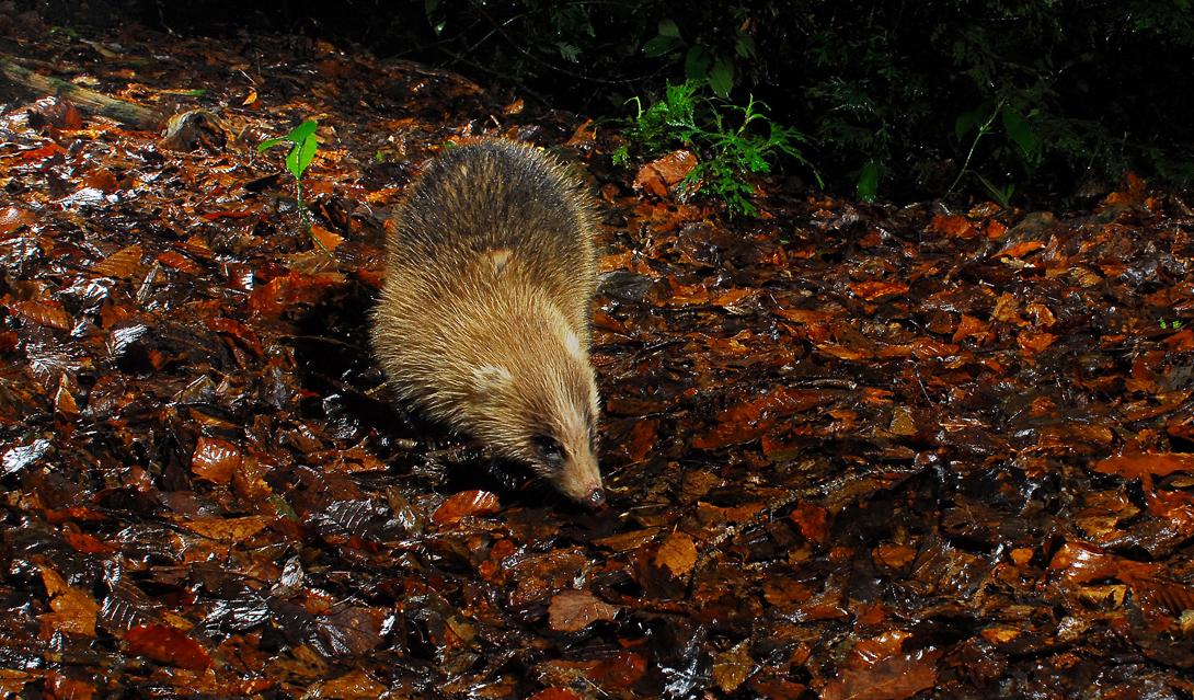 雨の降りしきる森を足早に歩く。毛先も濡れています