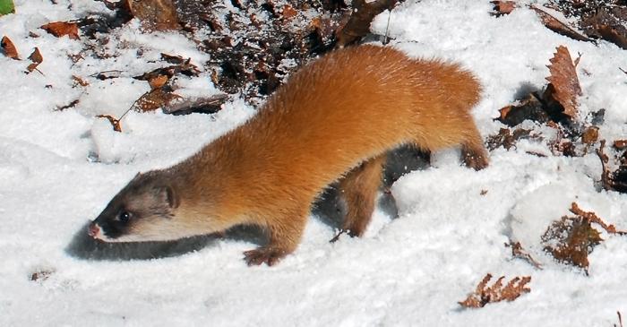 落ち葉に積もった雪の上を周囲を警戒しながら歩く
