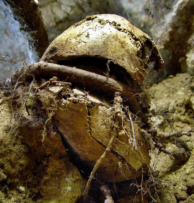 木の根に巻き付かれ割れてしまった遺骨の頭骨、浦添市で