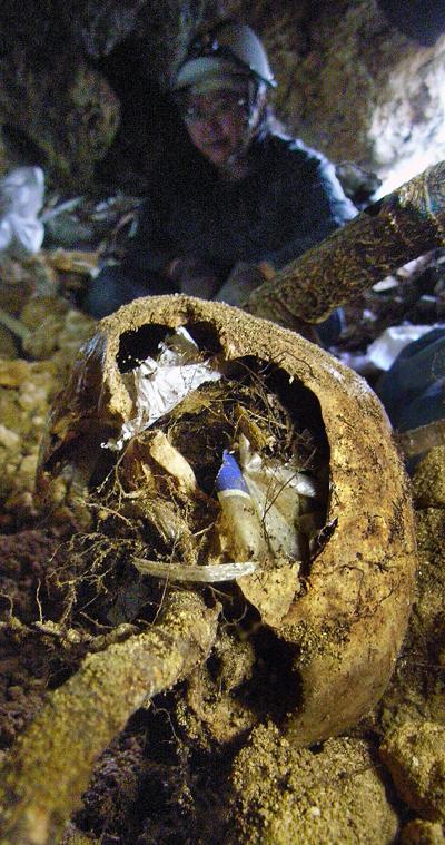 根に貫かれた頭骨は一部が割れ、中にゴミやヒゲ根が一杯に詰っていた