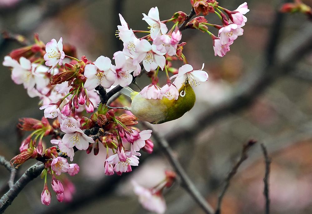 小枝に留まって蜜を吸い出すと何とか‥