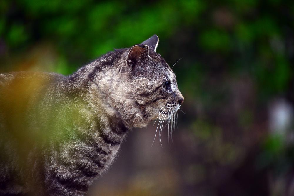 山猫⑤hp