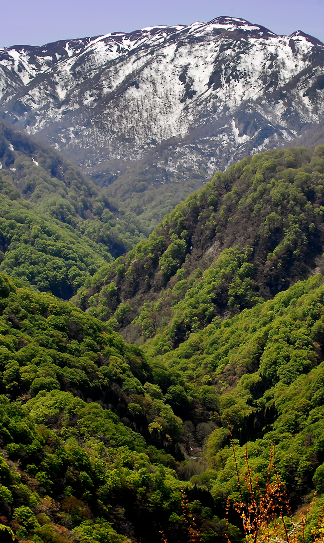 新緑の白神岳②hp