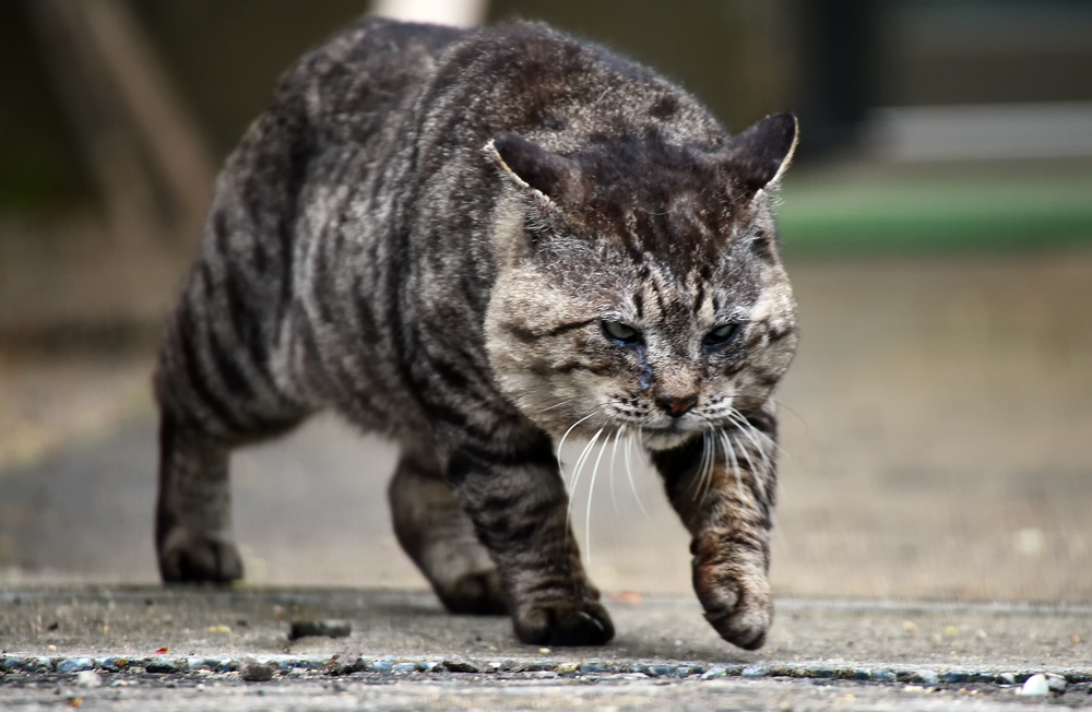 山猫⑥hp