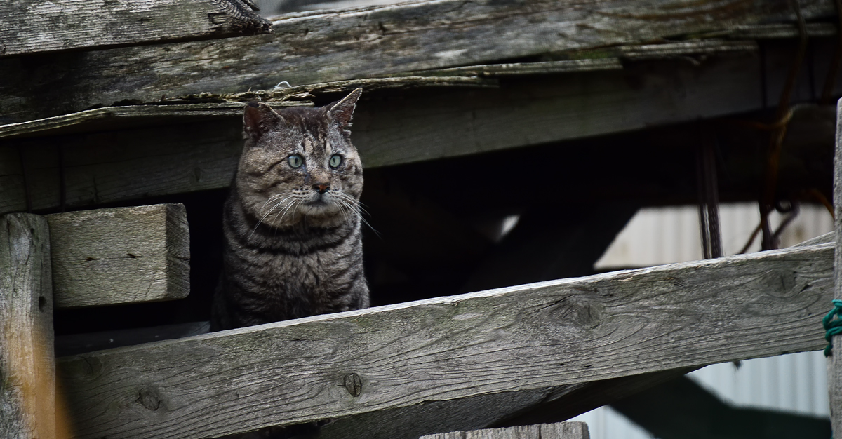 山猫②hp