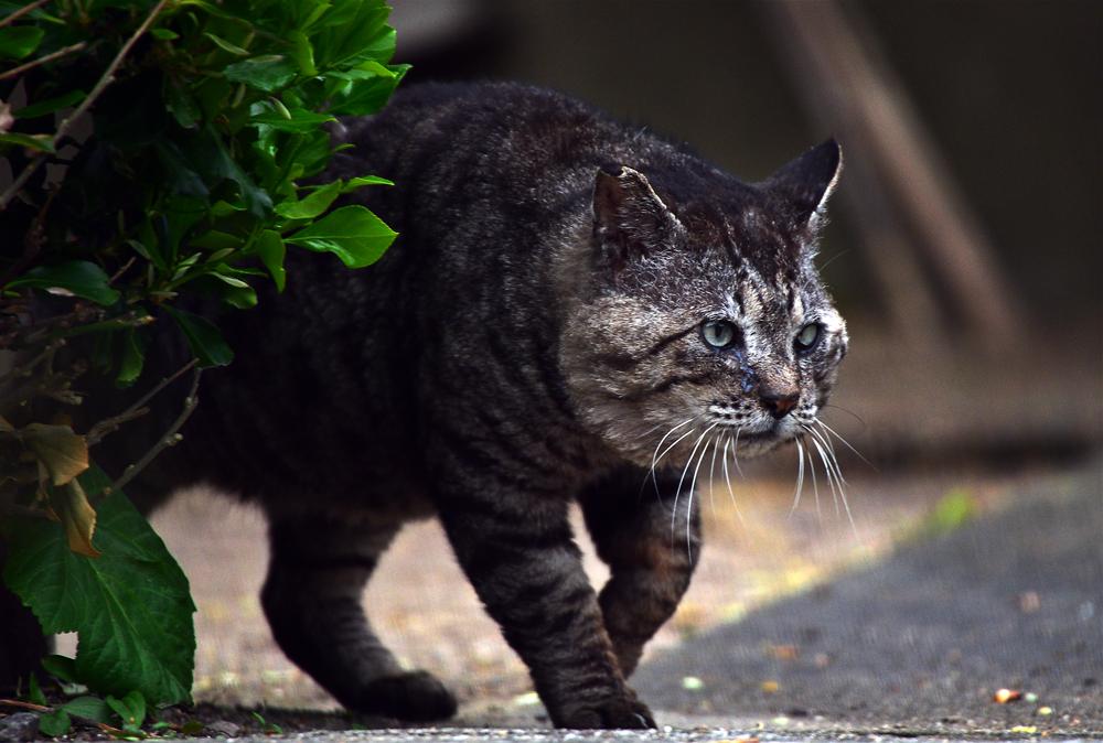 山猫①hp