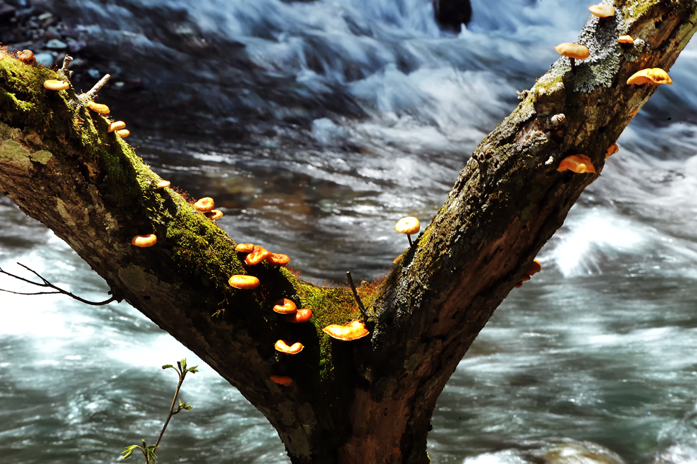 渓流とキノコhp