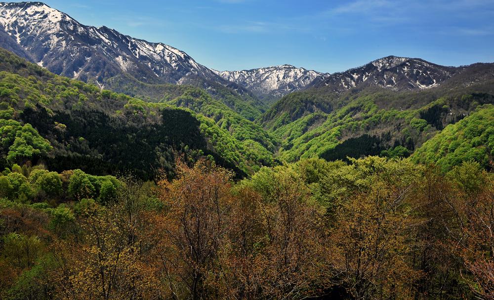 新緑の白神岳③hp