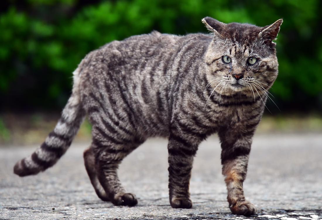 山猫⑦hp