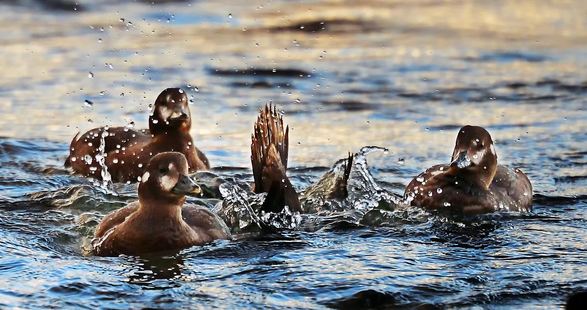 海から帰ってきたら、川でも潜る訓練