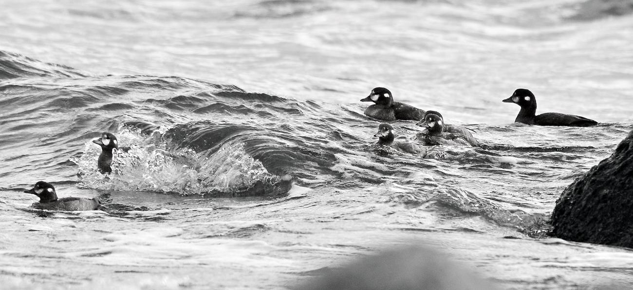 海に出て、波間の揉まれながら餌を採る親子