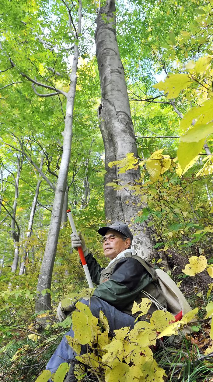 まだ緑が残るブナの林で一服する伊勢親方