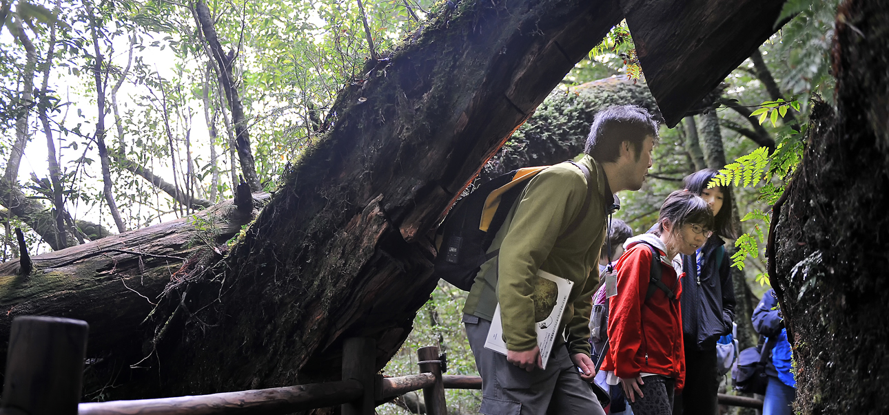 コースのあちこちに巨木が倒れ掛かっていた
