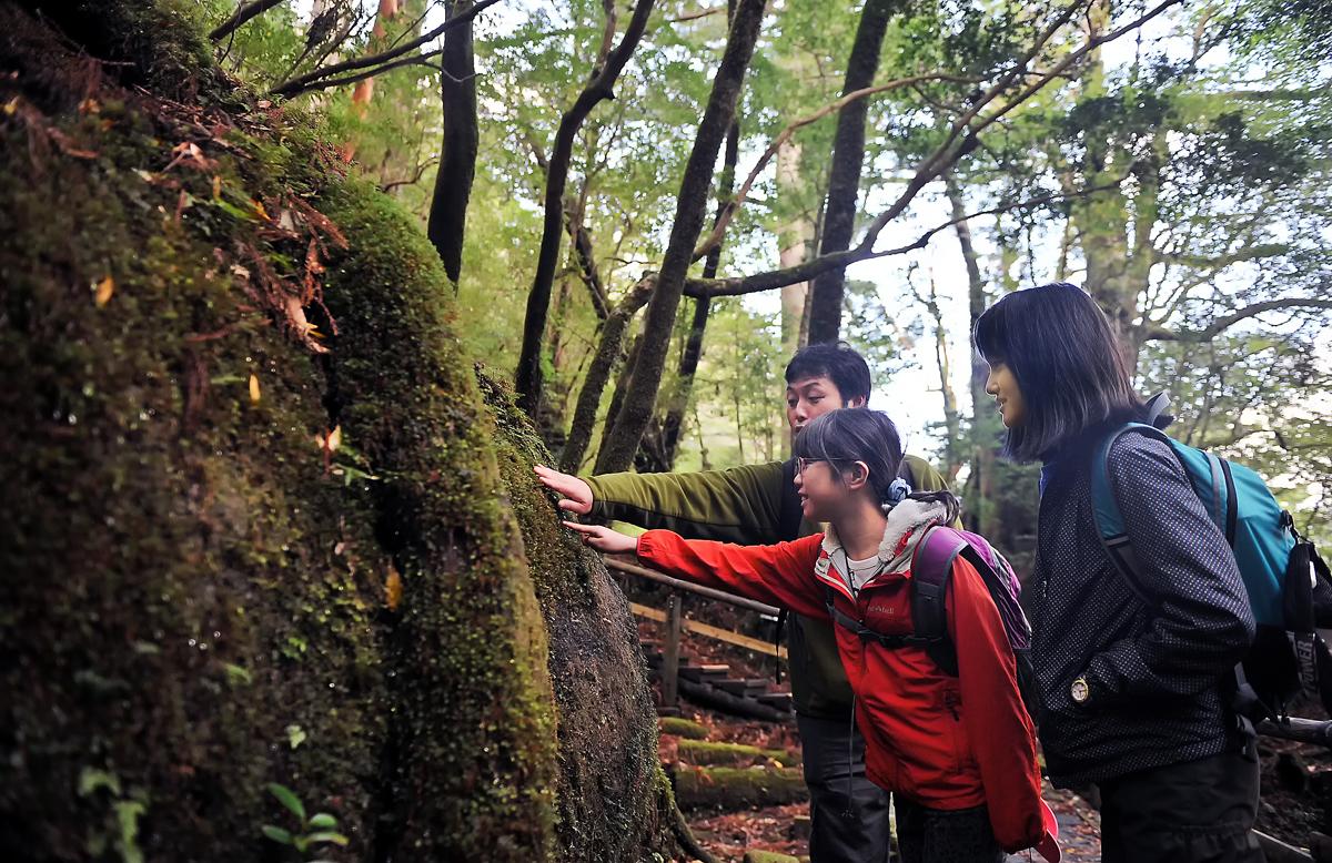 ふかふかの苔を触ってみた。えー、こんな感触は初めて