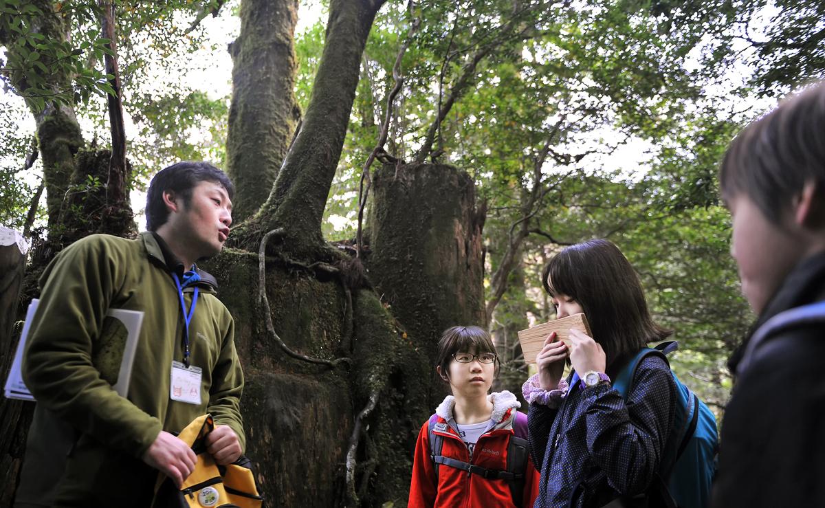 切り株更新中の巨樹の前で、屋久杉の端材の香りを嗅ぐ理花ちゃん