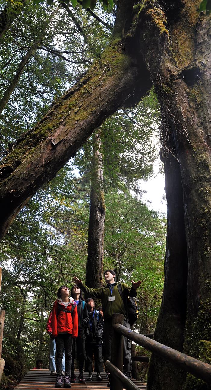 巨木の間から上を見上げる