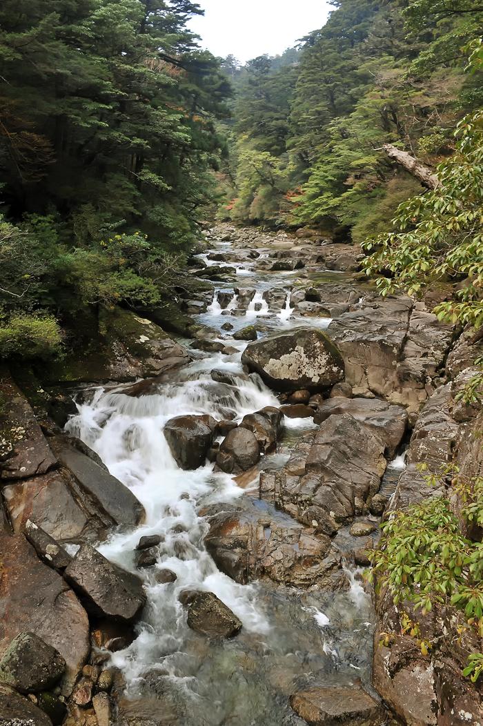 ヤクスギランドの中を流れる渓流