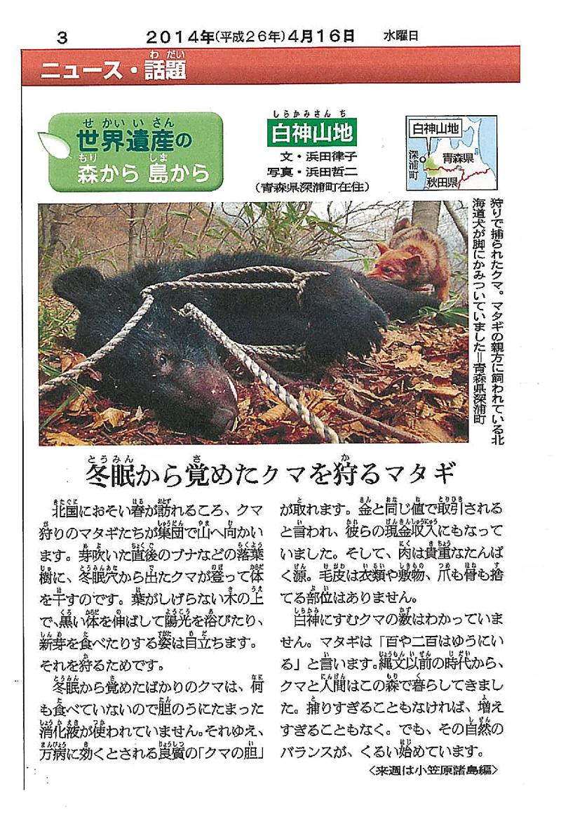朝日小学生新聞連載企画「白神山地シリーズ」2回目のPDF