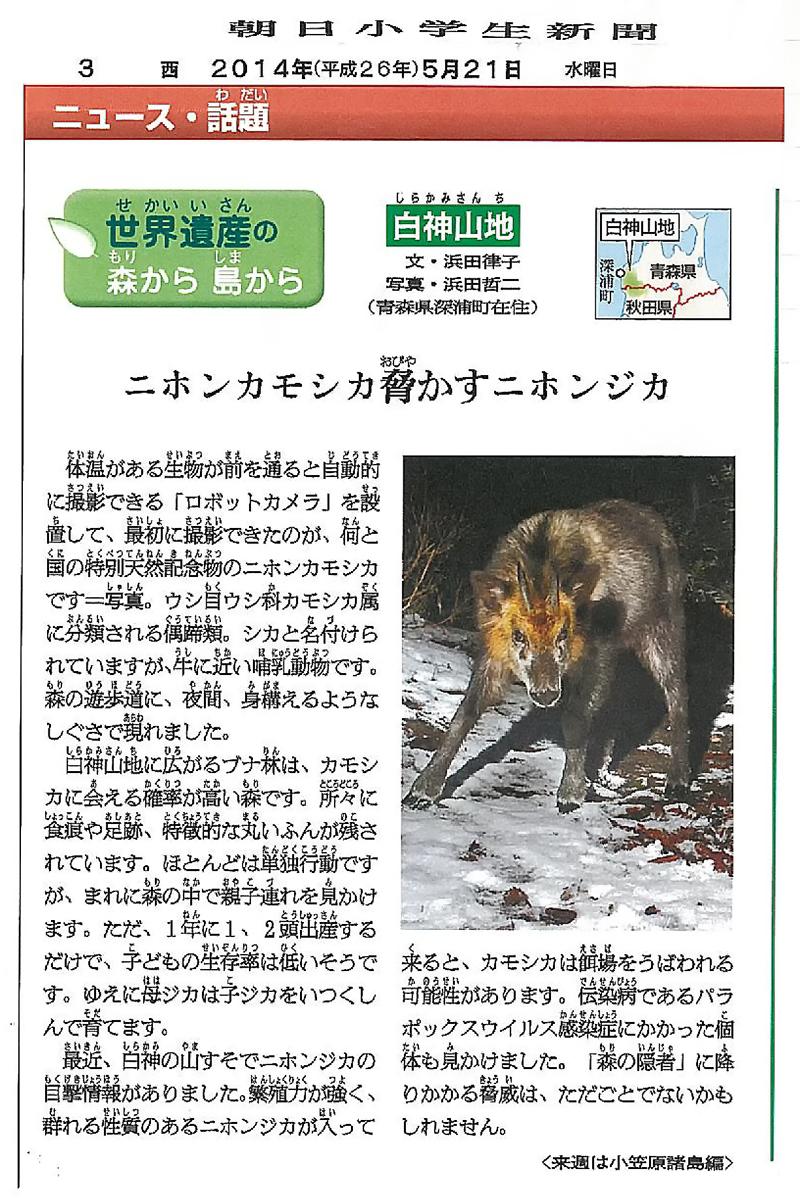 朝日小学生新聞連載企画「白神山地シリーズ」4回目のPDF
