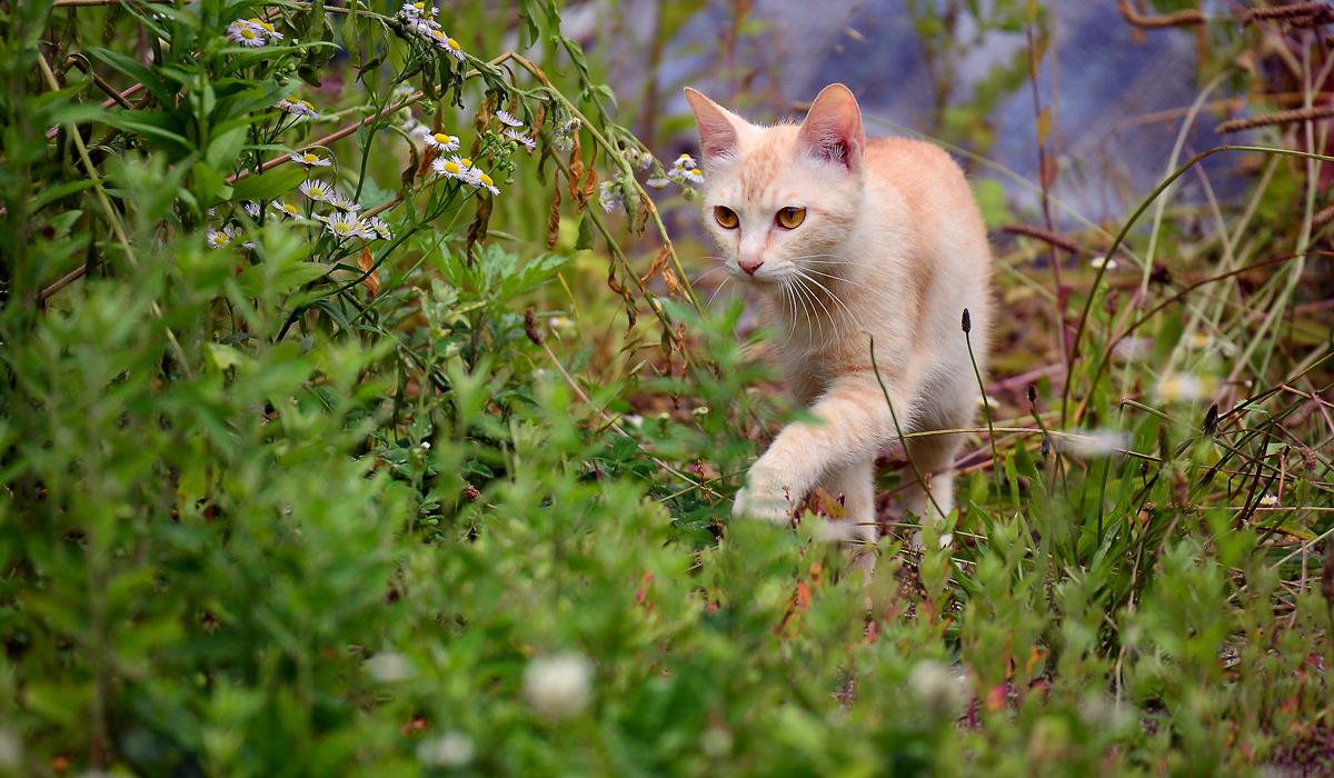 寅次郎の娘と見られる美猫。お母さんになった