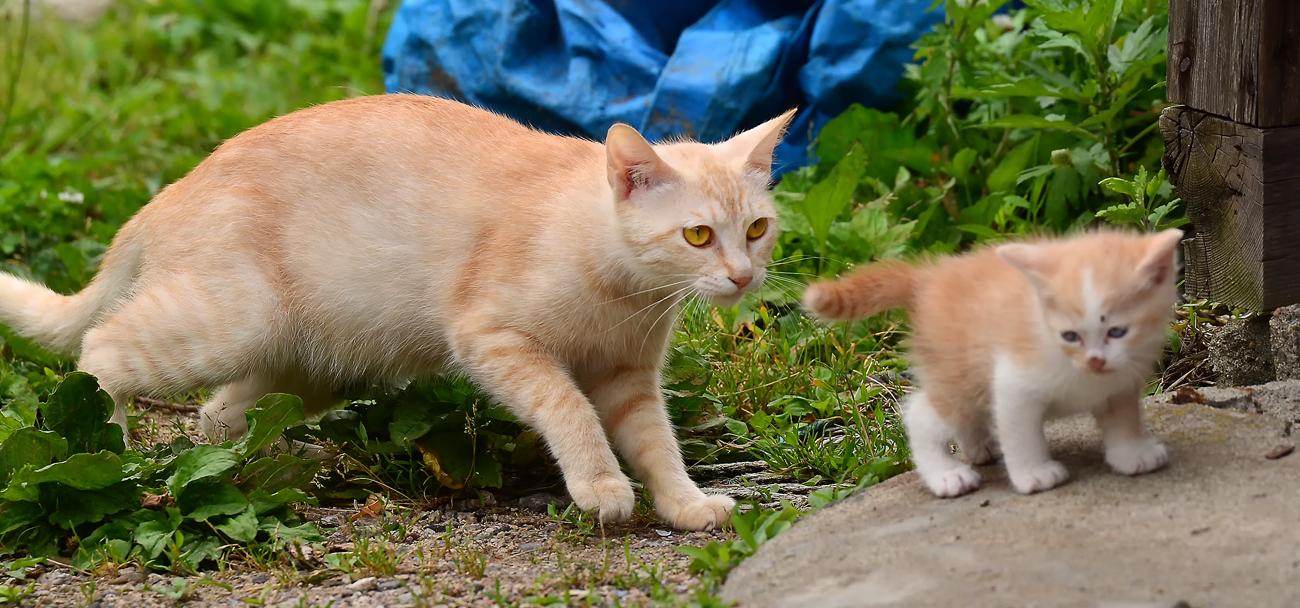 やんちゃ盛りな仔猫に付きっきりのお母さん猫
