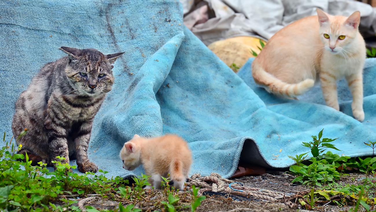 「コラ、オカアチャンの言うことを聞きなさい」と叱る寅次郎。仔猫はシュン‥