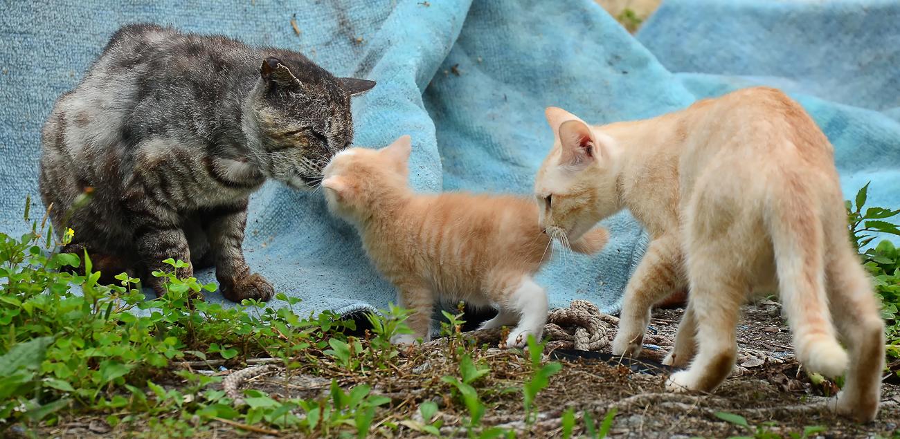 「わかったよ、寅じいちゃん」と、顔を擦り付ける子猫。「寅さんの言うことは聞くのね」とお母さんはプンプン