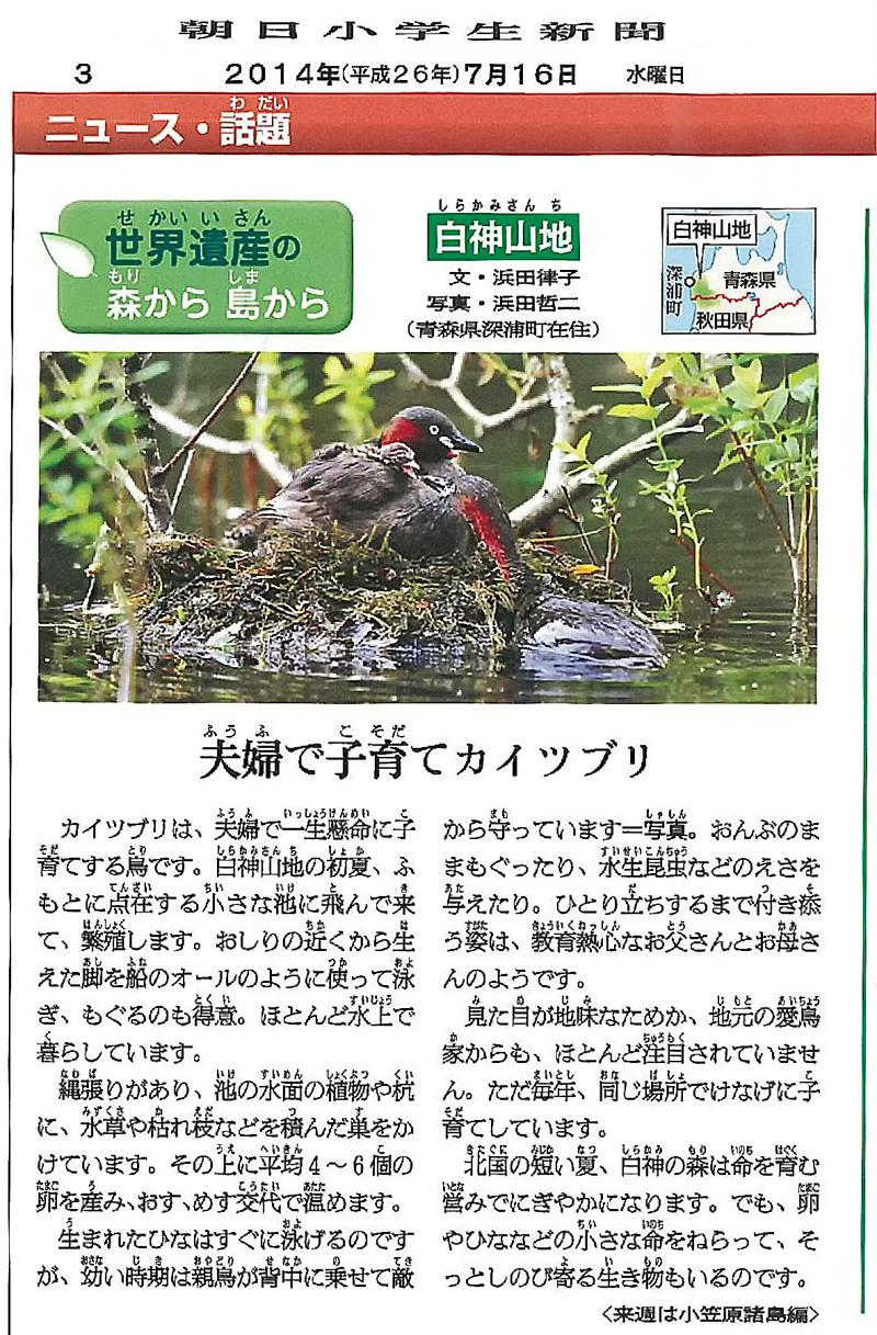 朝日小学生新聞の連載「白神シリーズ」8回目