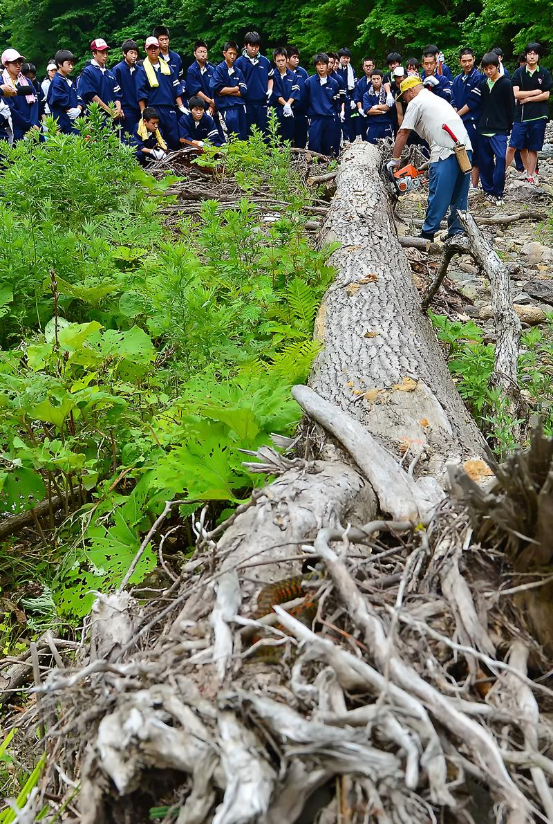 高校生と実施した流木回収の作業に、こっそりと参加していたヤマカガシ君。さぁ、どこにいるのでしょうか?