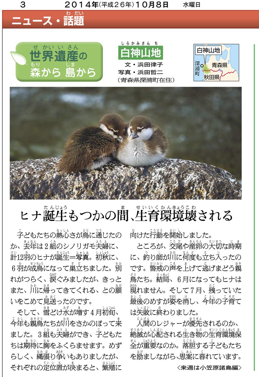 朝日小学生新聞の連載「白神シリーズ」12回目