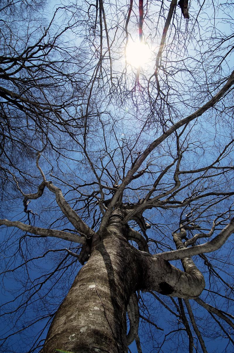 初春の白神の森で撮影したブナの梢と青空