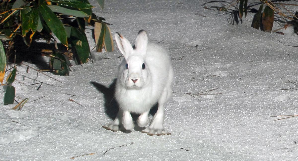 アオーネに仕掛けたロボットカメラの前に現れたウサギ