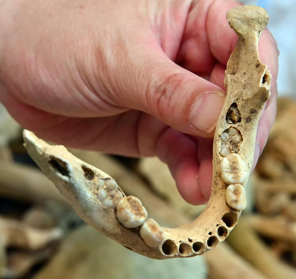 トーチカから出てきた子供らしき顎の骨。奥歯などが生え揃っていない
