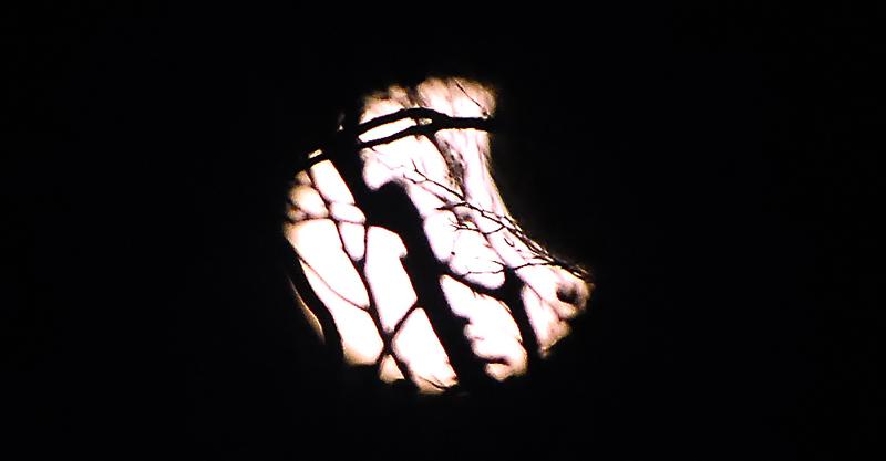 皆既日食に浮かび上がるブナの梢