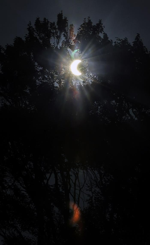 皆既日食がブナの木陰から見えた