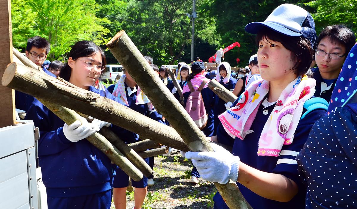 女子は細い木をたくさん運ぶ