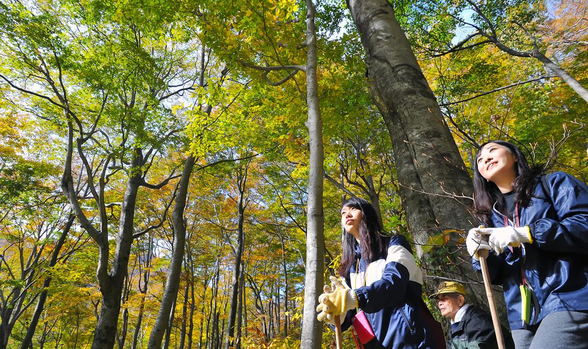 色づき始めたブナの森を見上げるIVUSAの二人