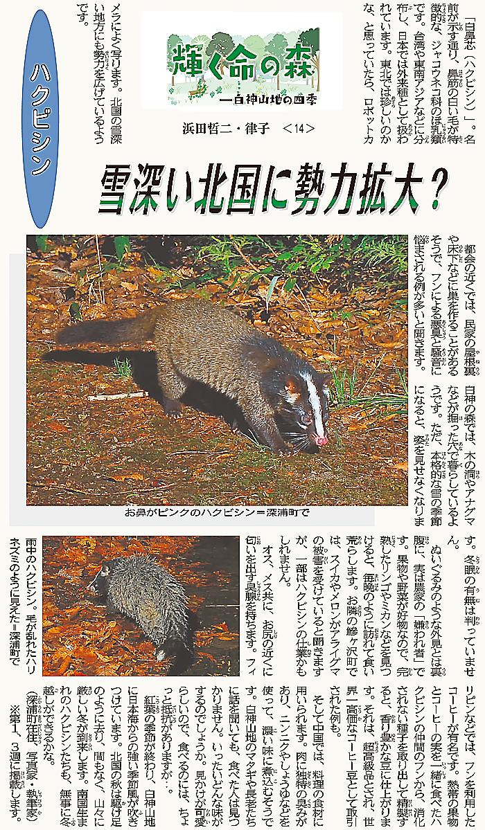 東奥日報「Juni Juni」の連載14回目のハクビシン