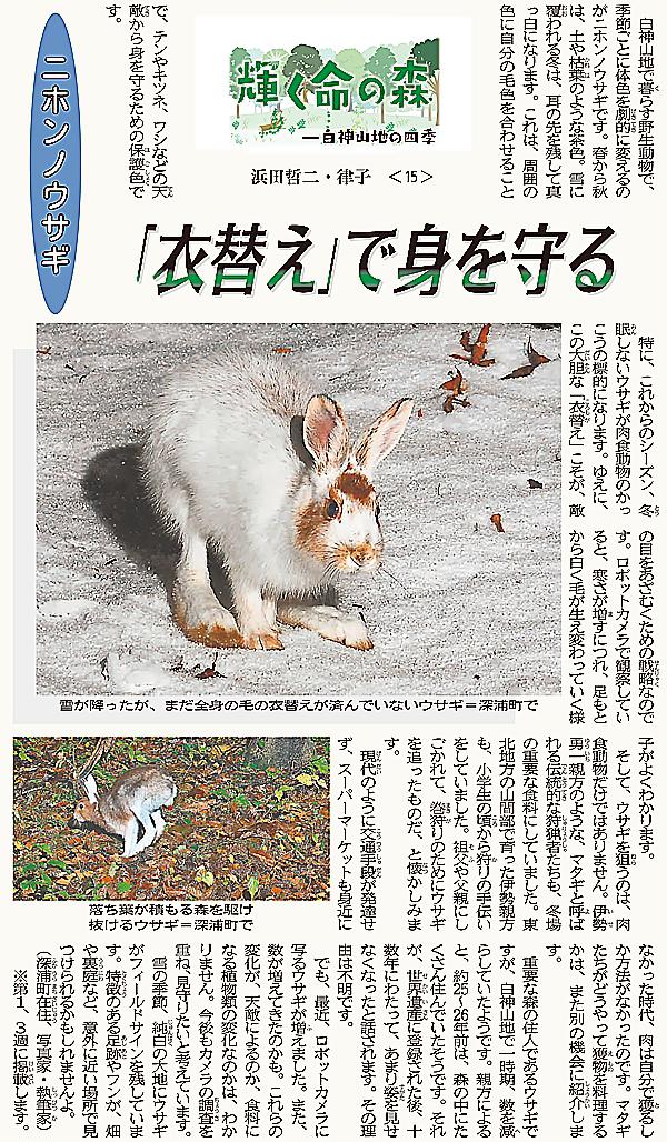 連載15回目はニホンノウサギ