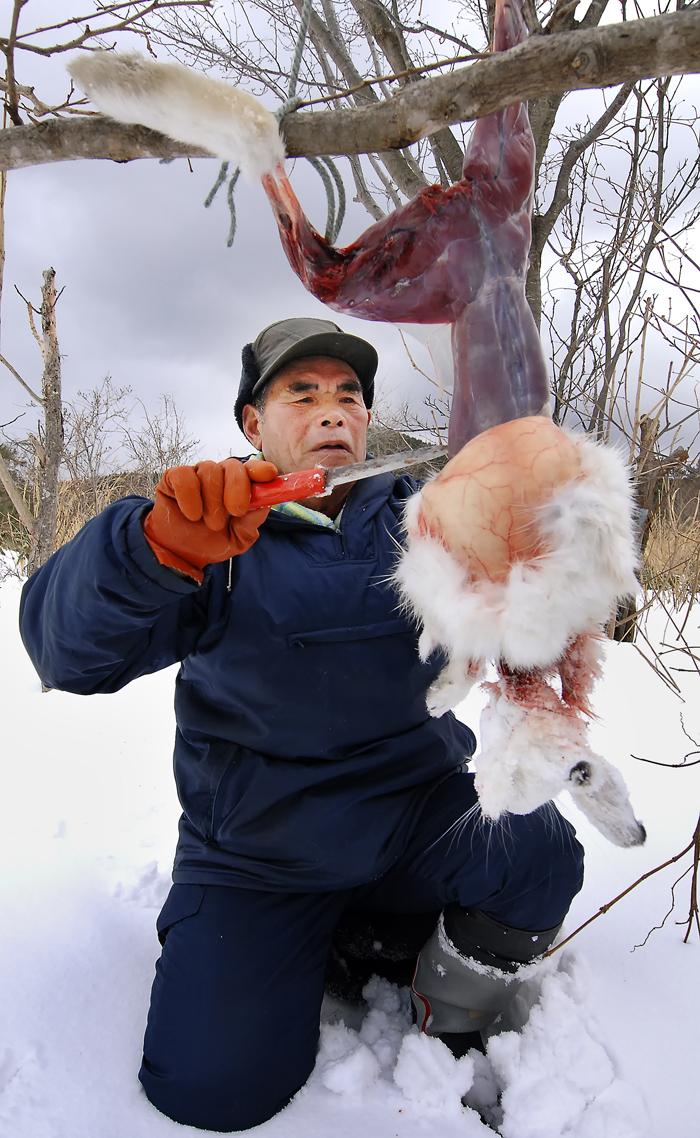 伊勢親方に皮をむかれるウサギ