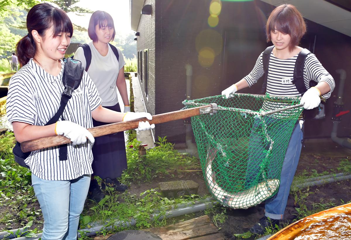 網に入れて捕獲。「大切なお魚だから慎重に、ね!」